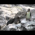 This Penguin is a Jerk.