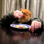 Civilized cat eats fish with hands while enjoying Jay-Z